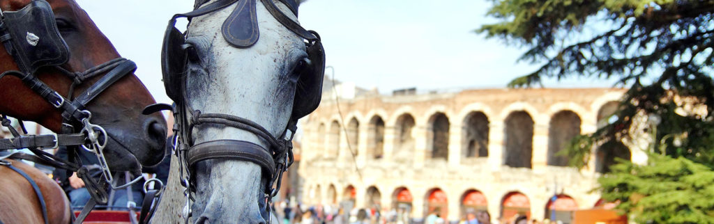 Verona between a good glass of wine and a horse race